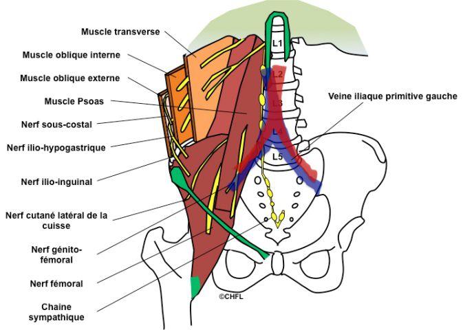 Laiguille pour le service cervical de lépine dorsale